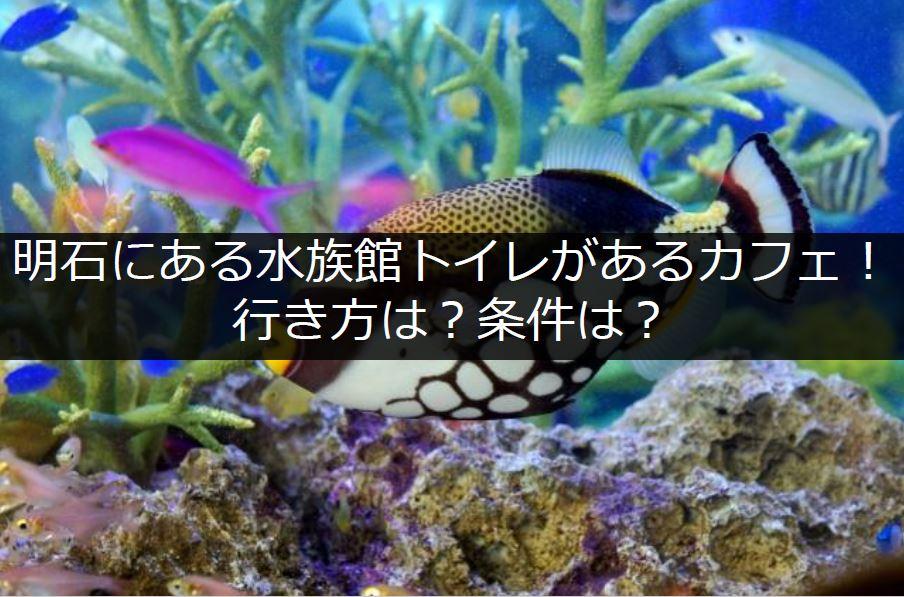 明石の水族館トイレタイトル