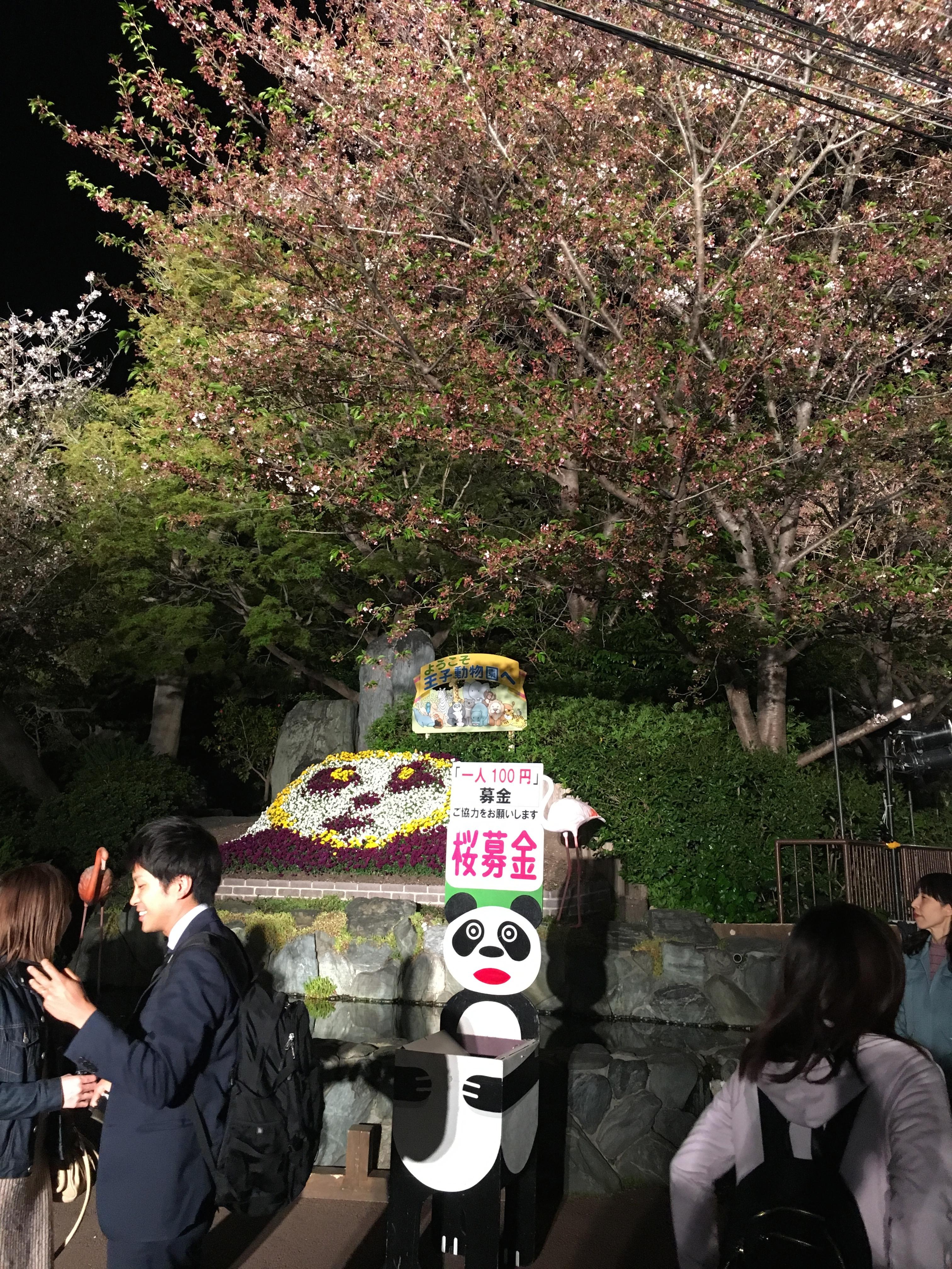 王子動物園 夜桜通り抜け
